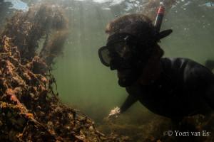 Onderwaterfotograaf Yoeri van Es snorkelt bij Dreischor - Foto: Yoeri van Es
