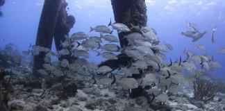Vissen onder de Saltpier op Bonaire - Foto: Yoeri van Es Photography