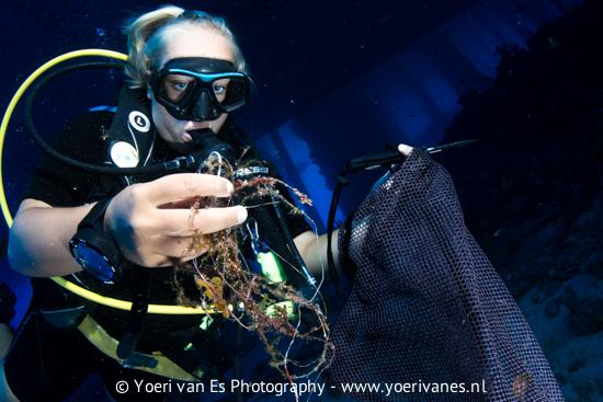 Duiker ruimt vislijnen op - Foto: Yoeri van Es