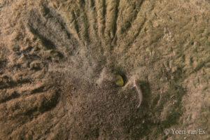De stervormige berg van een dikkopje - Foto: Yoeri van Es