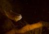 Jonge snotolf - Foto: Yoeri van Es Photography