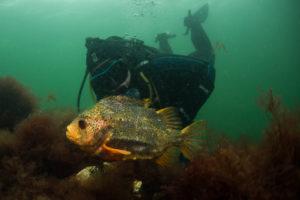 Snotolf en duiker - Foto: Yoeri van Es Photography