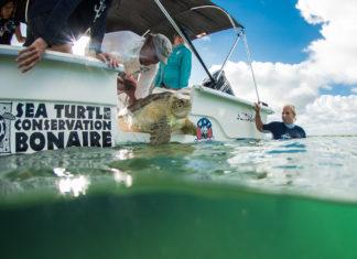 Schildpad wordt weer vrijgelaten op Bonaire - Foto: Yoeri van Es