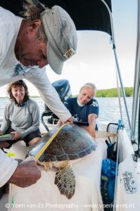 Groene schildpad wordt gemeten - Foto: Yoeri van Es
