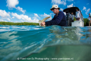 Schildpad wordt vrijgelaten op Bonaire - Foto: Yoeri van Es