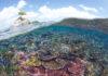 Tree Rock in het Tun Mustapha Park - (C) WWF-Malaysia / Eric Madeja