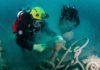 Duikers van Expeditie Zuid 2016 verwijderen bijna 2 ton visnetten en ontdekken een zeer zeldzame diersoort voor Nederland