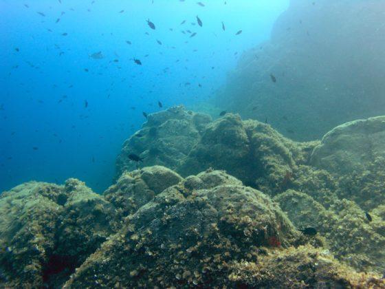 Elba onderwaterlandschap - Foto: Anders Finn Jørgensen / CC BY-SA 20