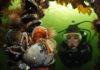 Winnende foto categorie groothoek met duiker bij het Nederlands Kampioenschap Onderwaterfotografie 2016 - Foto: Raymond Wennekes
