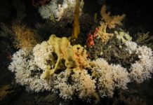 Koudwaterkoraalriffen
