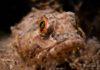 Groene zeedonderpad - Foto: Yoeri van Es