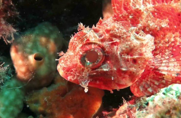 Screenshot video The Sea van Ronald Faber