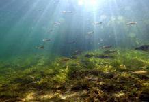 Wildernis onder water - Foto: Edwin Sterckel