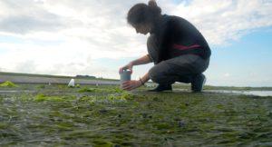 Laura Soissons in a Zostera noltei zeegrasmade (Oosterschelde Oostdijk) - Foto: Laura Soisson - NIOZ