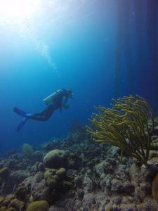 Duiker bij Salt Pier, Bonaire - Foto: Wil Stutterheim