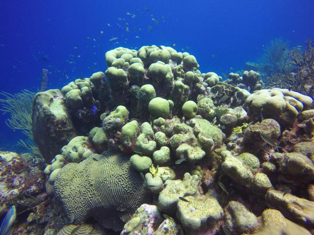 Koraalrif Oostpunt Curaçao - Foto: Wil Stutterheim