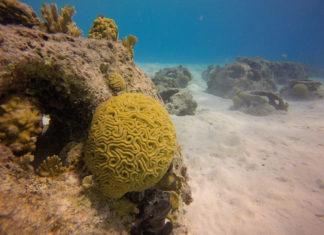 Kunstrif (reefballs) bij Porto Playa Marie, Curaçao - Foto: Wil Stutterheim