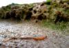 Zager in het zand