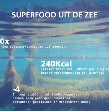 NIOZ zeewier infographic