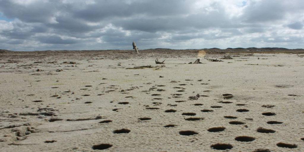 Bemonstering microbiële matten - Foto: Henk Bolhuis