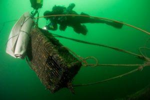 Duiker bergt kreeftenkorf - foto: Cor Kuyvenhoven
