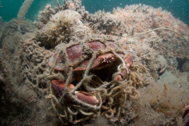 Noordzeekrab in visnet - Foto: Cor Kuyvenhoven