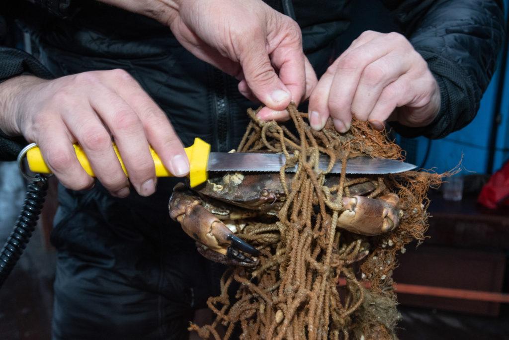 Noordzeekrab wordt bevreid uit spooknet - Foto: Joost van Uffelen