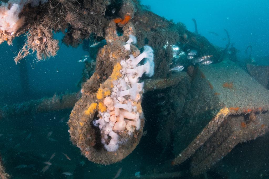 Wrak in de Noordzee - Foto: Joost van Uffelen