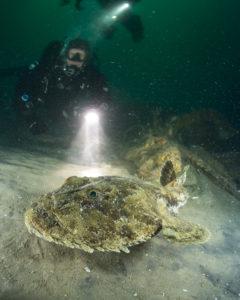 Zeeduivel op onbekend wrak Doggersbank - Foto: Udo van Dongen